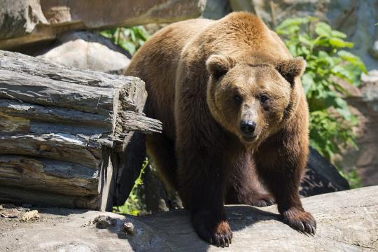 bear_18222736_b